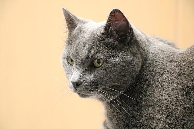 Die Vorsorgeuntersung kann ältere Katzen das Leben retten