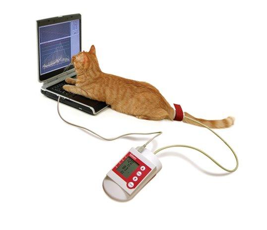 Blutdruckmessen bei Kleintieren